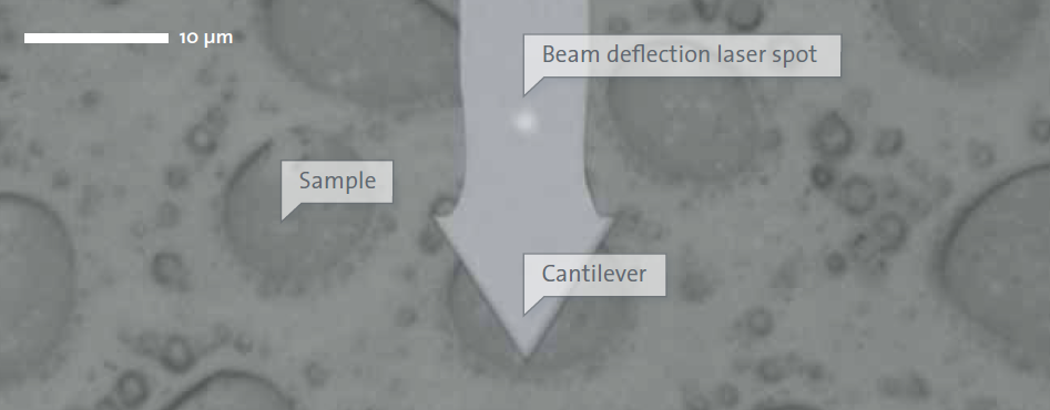 WITec AFM Sample Cantilever View